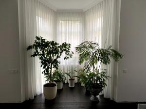 Aizkari dzīvojamā istabā ar augiem